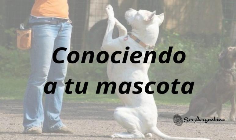 Foto-artículo-mascotas
