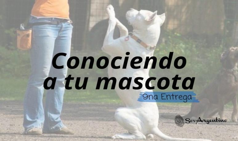 Foto-artículo-mascotas9