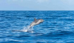delfines oscuros