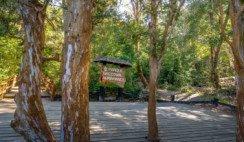 Bosque Arrayanes