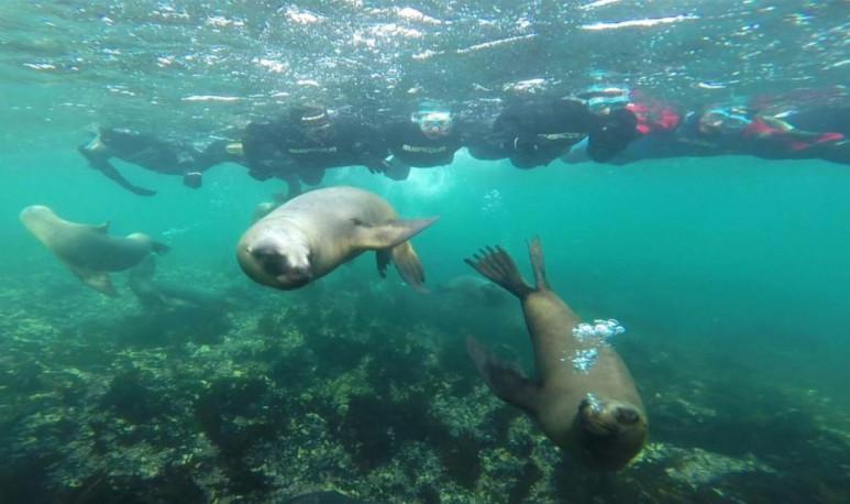 Cómo-iniciarse-en-el-snorkel