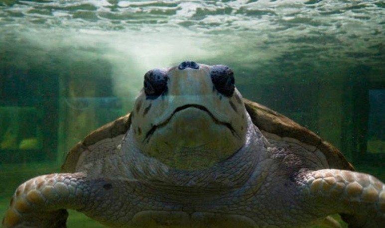 El-tortugo-Jorge