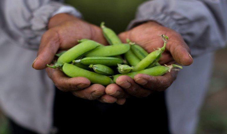 La-yapa-verduras