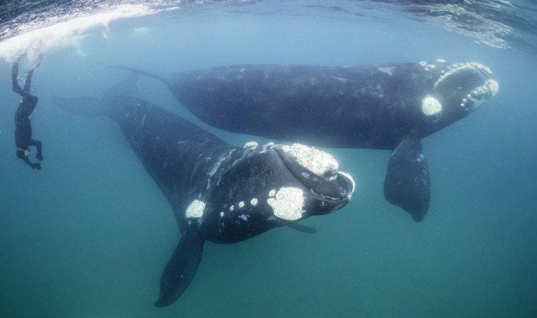 peninsula-ballenas