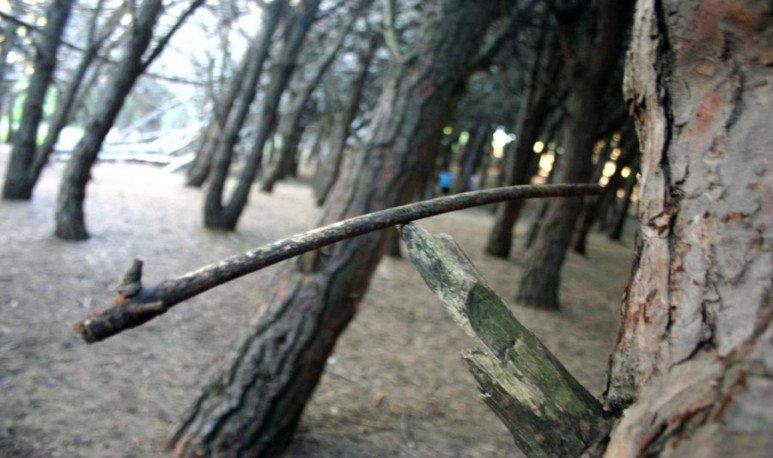 Miramar-Bosque-encantado1