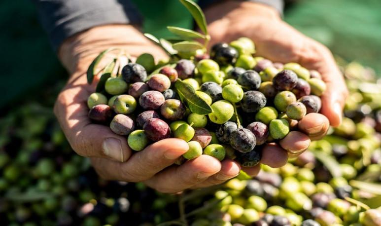 Cruz-del-Eje-es-la-producción-olivícola