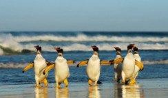 10 curiosidades sobre los pinguinos
