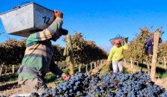 La Riojana: 80 años de unión, compromiso y trabajo