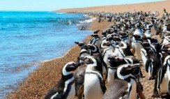 Entre pingüinos por Punta Tombo