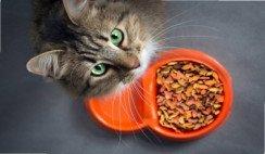 alimento mascotas natural