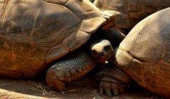 Una tortuga de 205 años