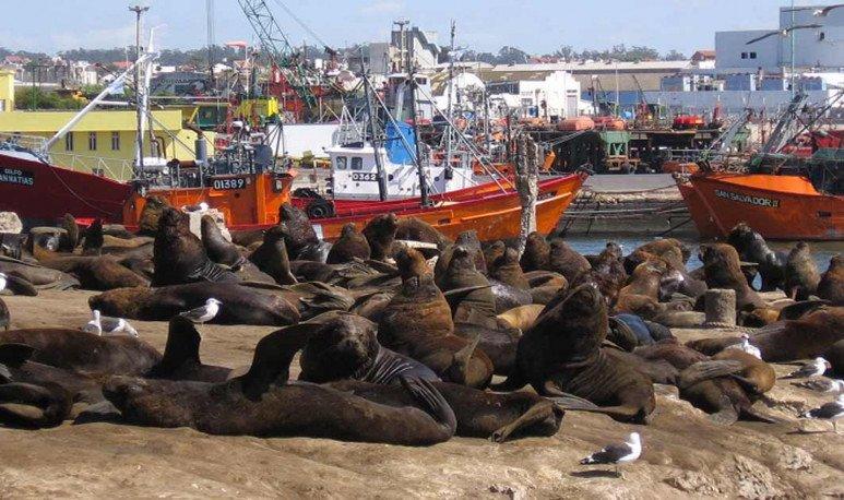 reserva de lobos marinos en puerto de Mar del Plata