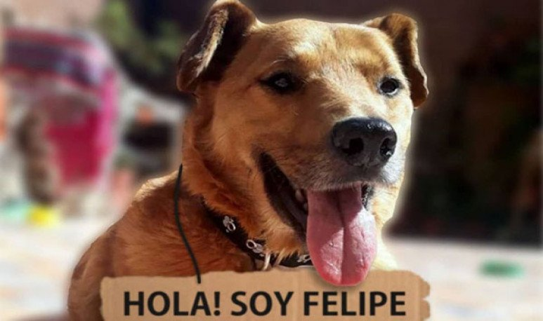 Felipe, un perrito cordobés