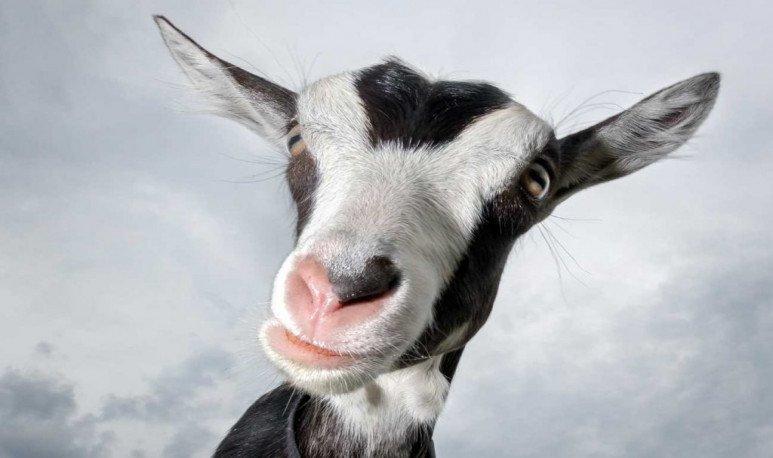 Más loca que una cabra