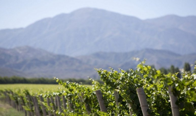 Cuyo es la tierra del vino