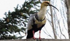 avistamiento de aves en La Pampa