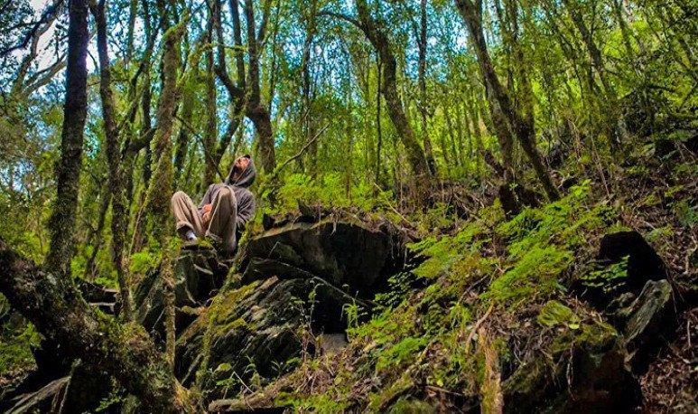 Capayan bosque de arayanes