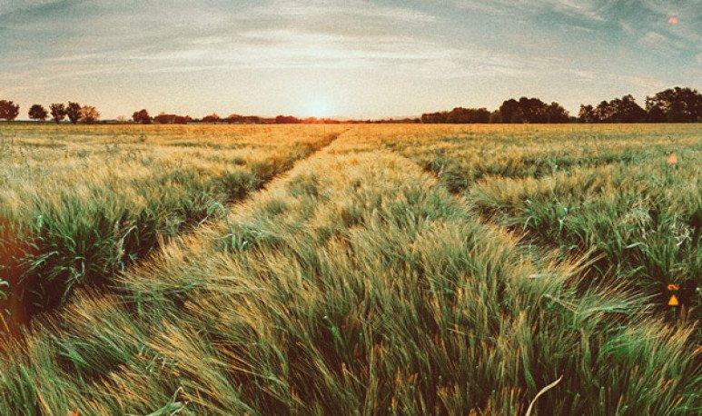 campos Santa Fe