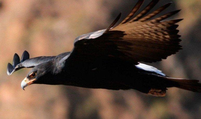 observacion de aves en salta