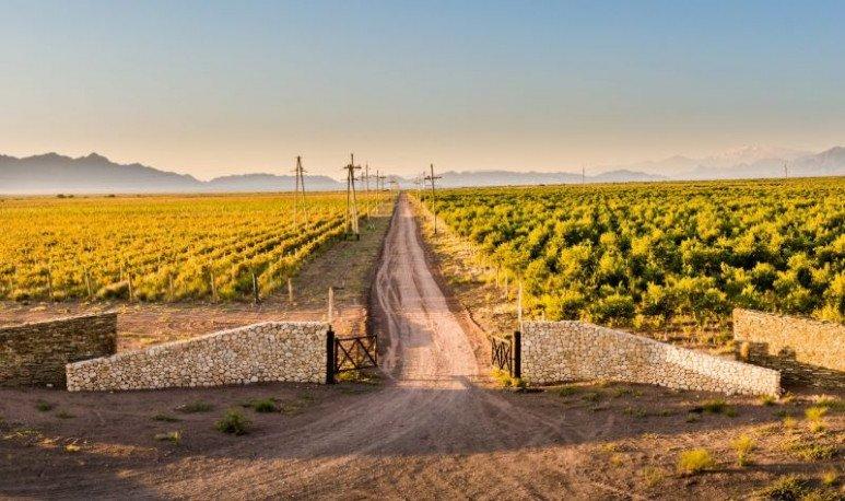 caminos del vino en catamarca