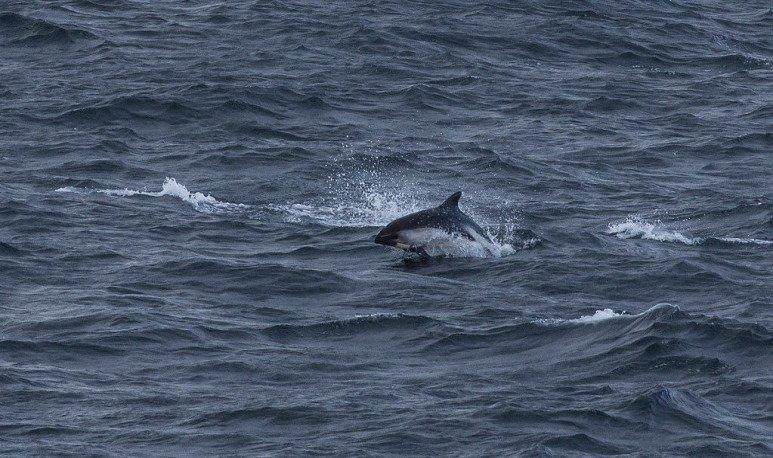 delfin en cabo blanco