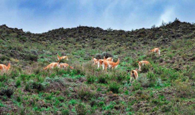 villavicencio nature reserve in mendoza