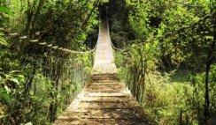 La Selva Misionera es uno de los biomas más importantes de Argentina.