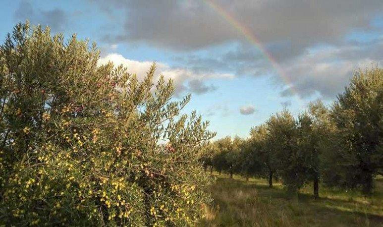 Ruta gastronomica del olivo en buenos aires