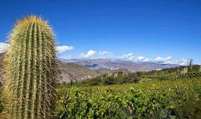Te invitamos a descubrir los vinos de Extrema Altura de la Quebrada de Humahuaca en Jujuy