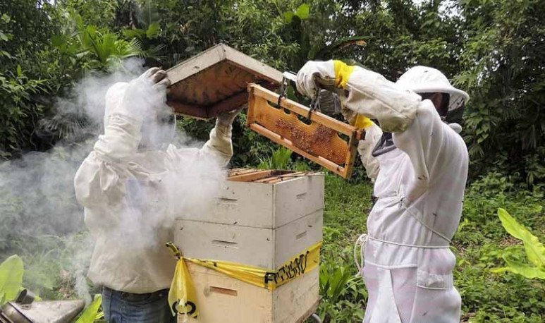 establecimientos apicolas en la provincia de buenos aires