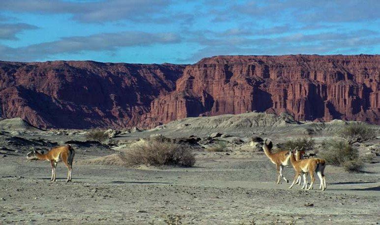 Recorrer Ischigualasto significa posar los pies sobre los mismos caminos que hace 180 millones de años recorrieron los dinosaurios